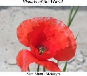 poppies pic